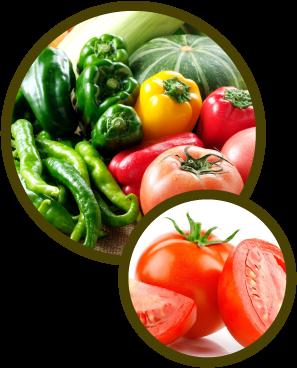 地元農家の生産者の無農薬野菜